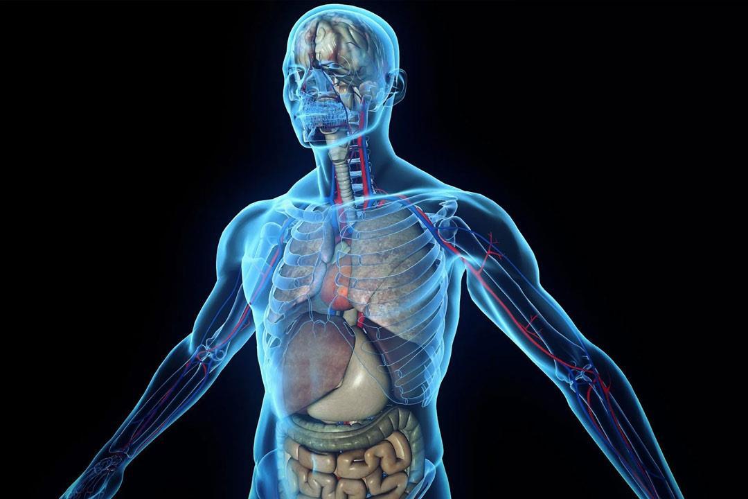 اكتشف أطباء عضوا جديدا في جسم الإنسان