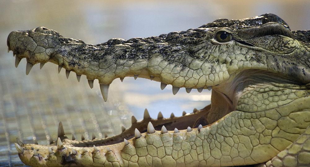 بالفيديو تمساح يحتجز شابا كرهينة!