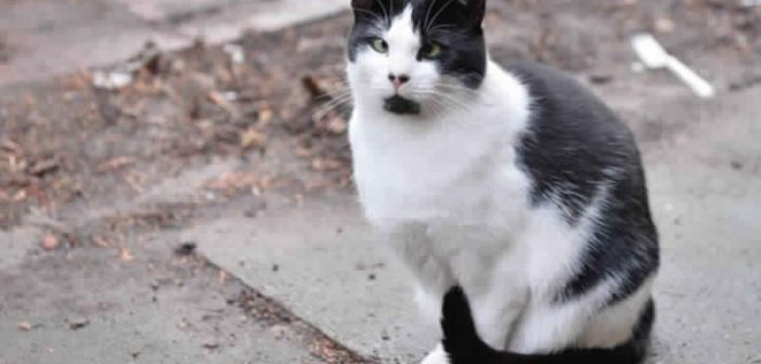 بالفيديو قطة تتبع قواعد المرور!