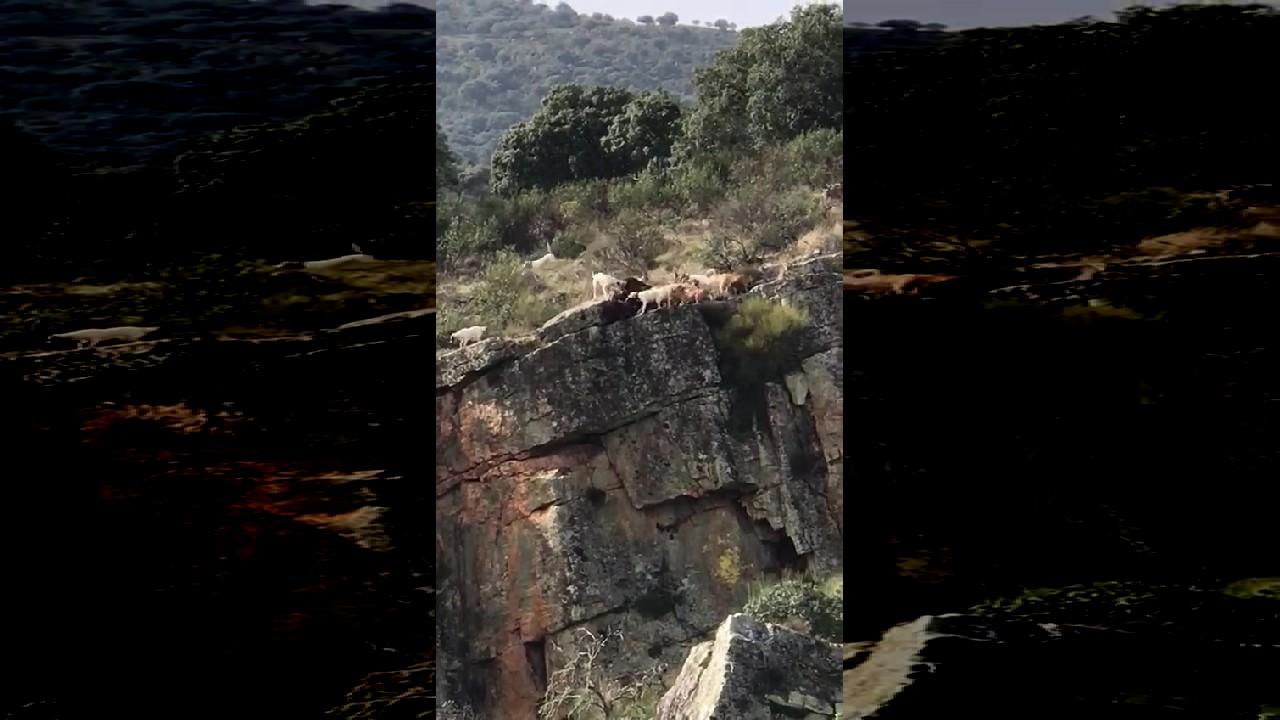 بالفيديو: سقوط الصياد و الفريسة من جرف صخري!