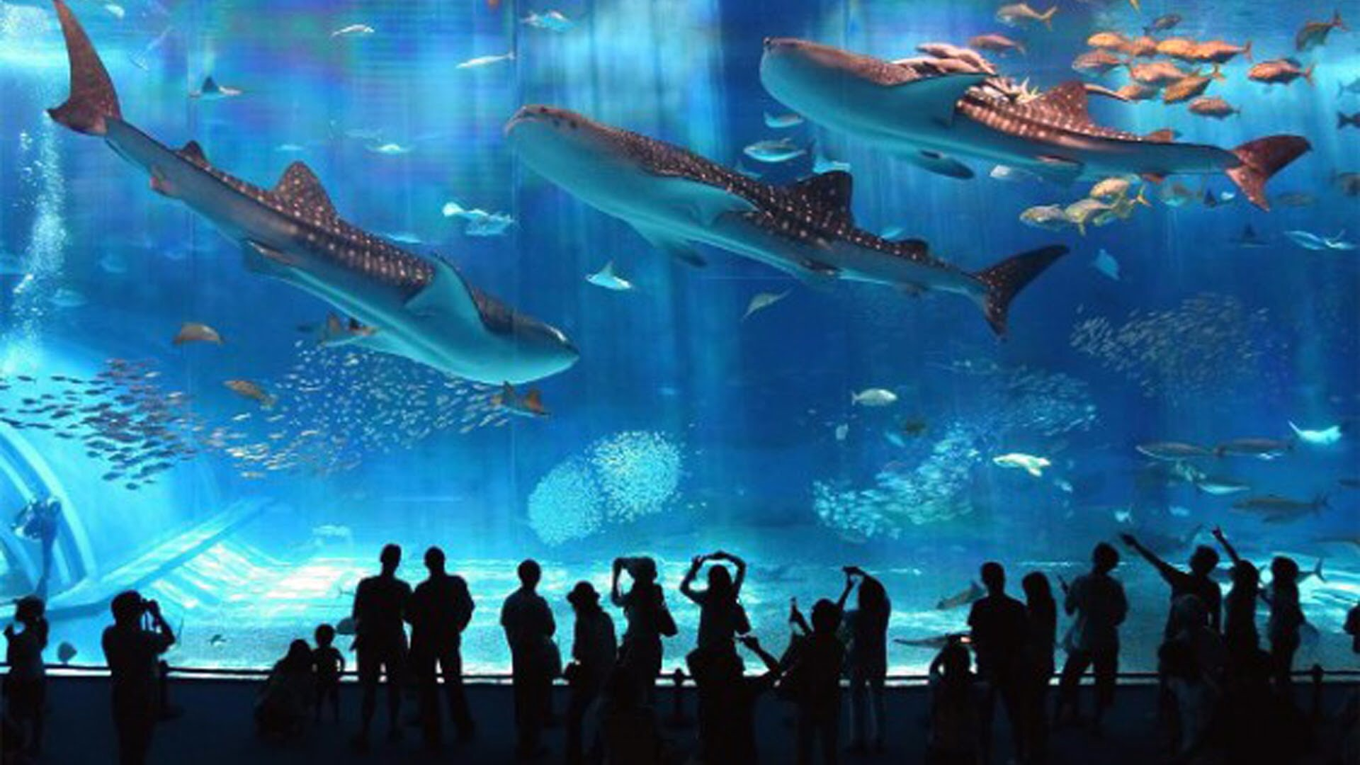 بالفيديو: سقوط فتاة في حوض أسماك القرش الجائعة!
