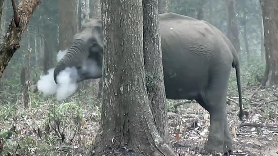 شاهد: الفيل المدخن.. ظاهرة حيرت العلماء!