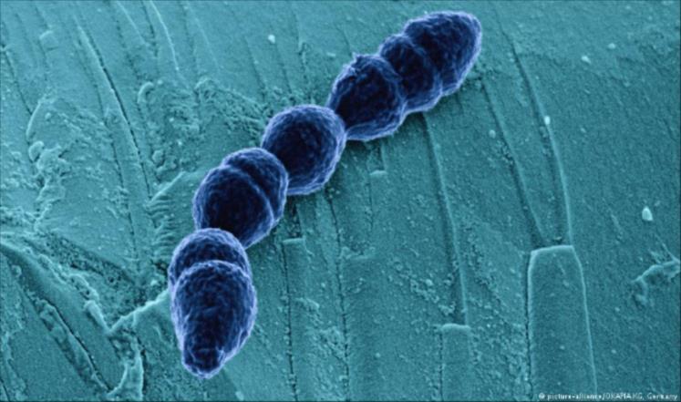 علماء روس يعتقدون أن هذه البكتيريا ستطيل حياتهم