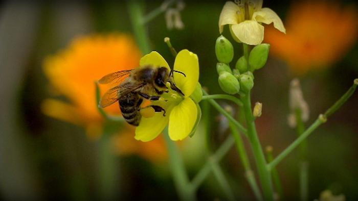 كيف تتصرف عند لدغة من النحل أوالدبابير؟