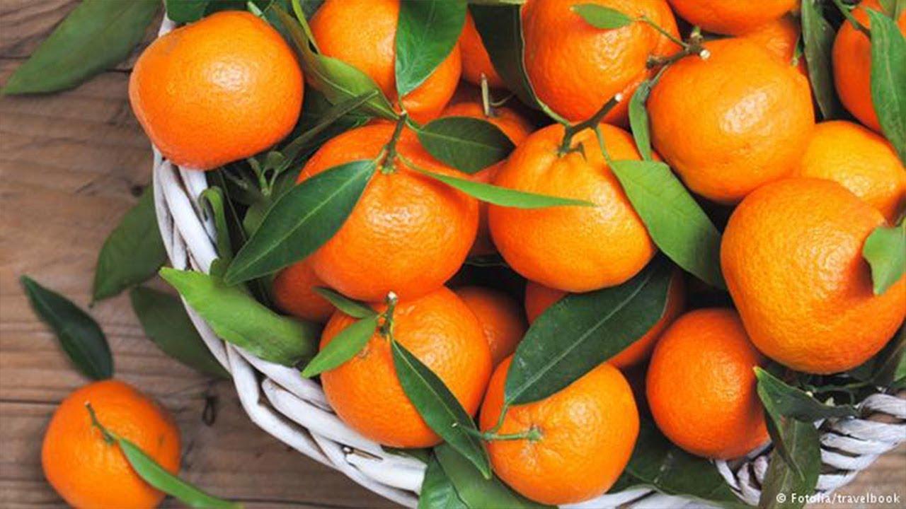 ما هي فوائد فاكهة اليوسفي لصحتك؟