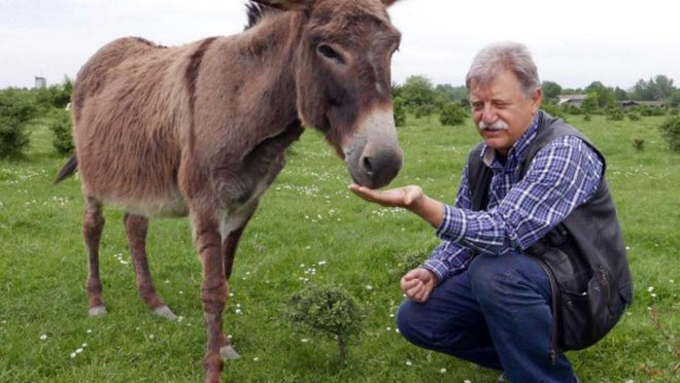 معلومات عن جبن الحمير أغلى الأجبان عالميا Cheese donkeys