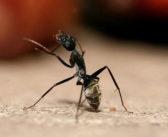 بالفيديو نملة تسرق قطعة ألماس وتهرب!