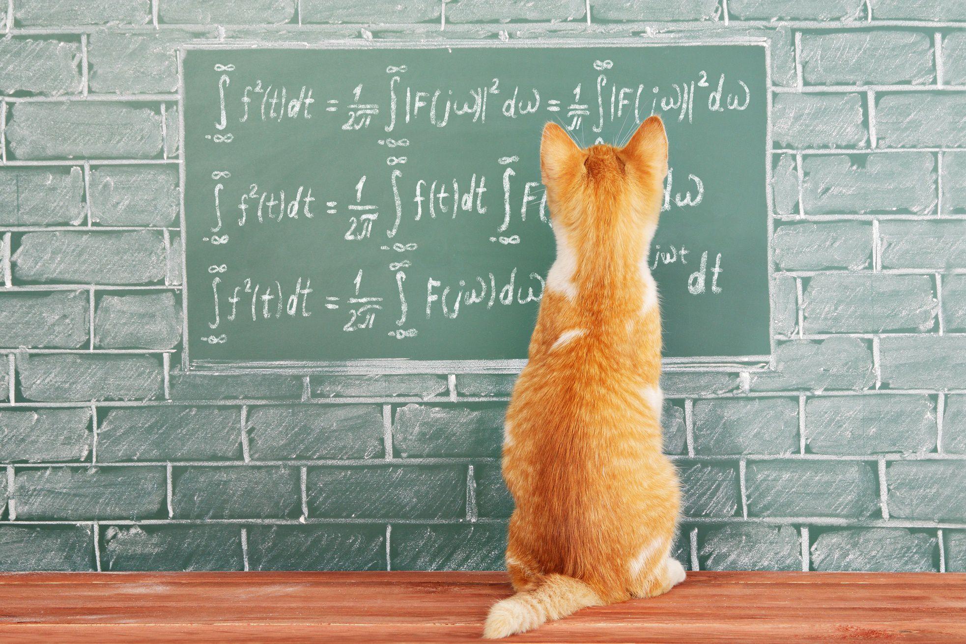 هل القطط تستطيع فهم القوانين الفيزيائية