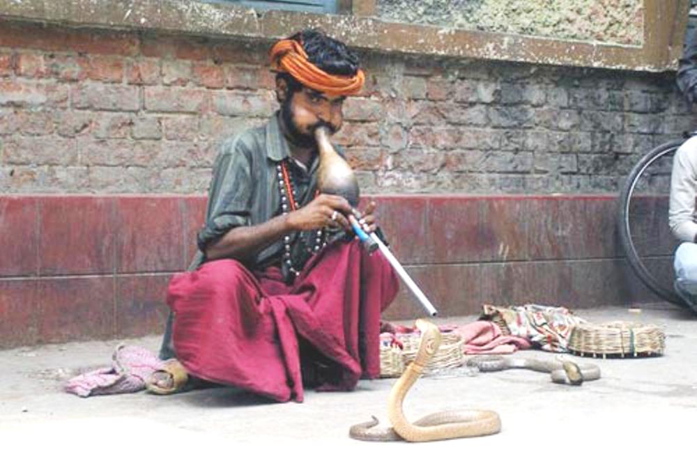 هل فعلا ترقص الثعابين مع الموسيقى ؟ Snake and music